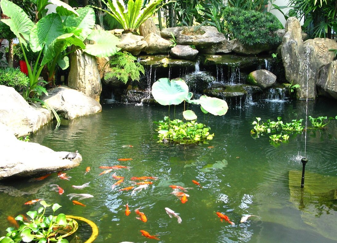 Thiết kế Hồ cá Koi - NBS
