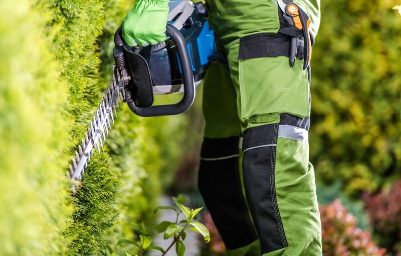 Dịch vụ bảo dưỡng cắt tỉa sân vườn NBS