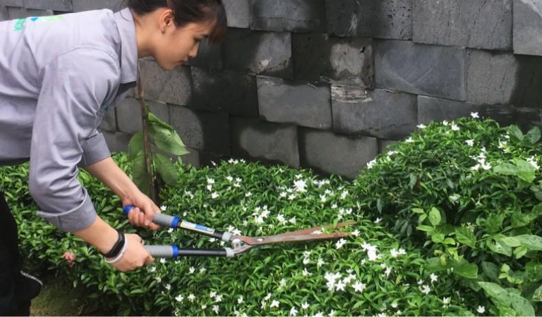 Dịch vụ chăm sóc cắt tỉa sân vườn NBS