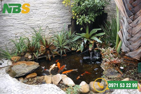 Lựa chọn giống cá Koi để thiết kế sân vườn