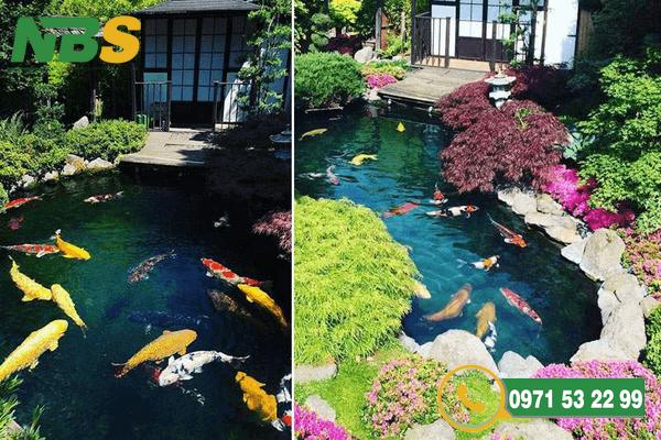 Thiết kế sân vườn với hồ cá Koi bằng xi măng