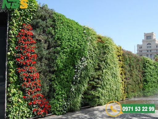 Thiết kế thi công tường cây xanh làm tăng tính thẩm mỹ, tạo nên sự thu hút
