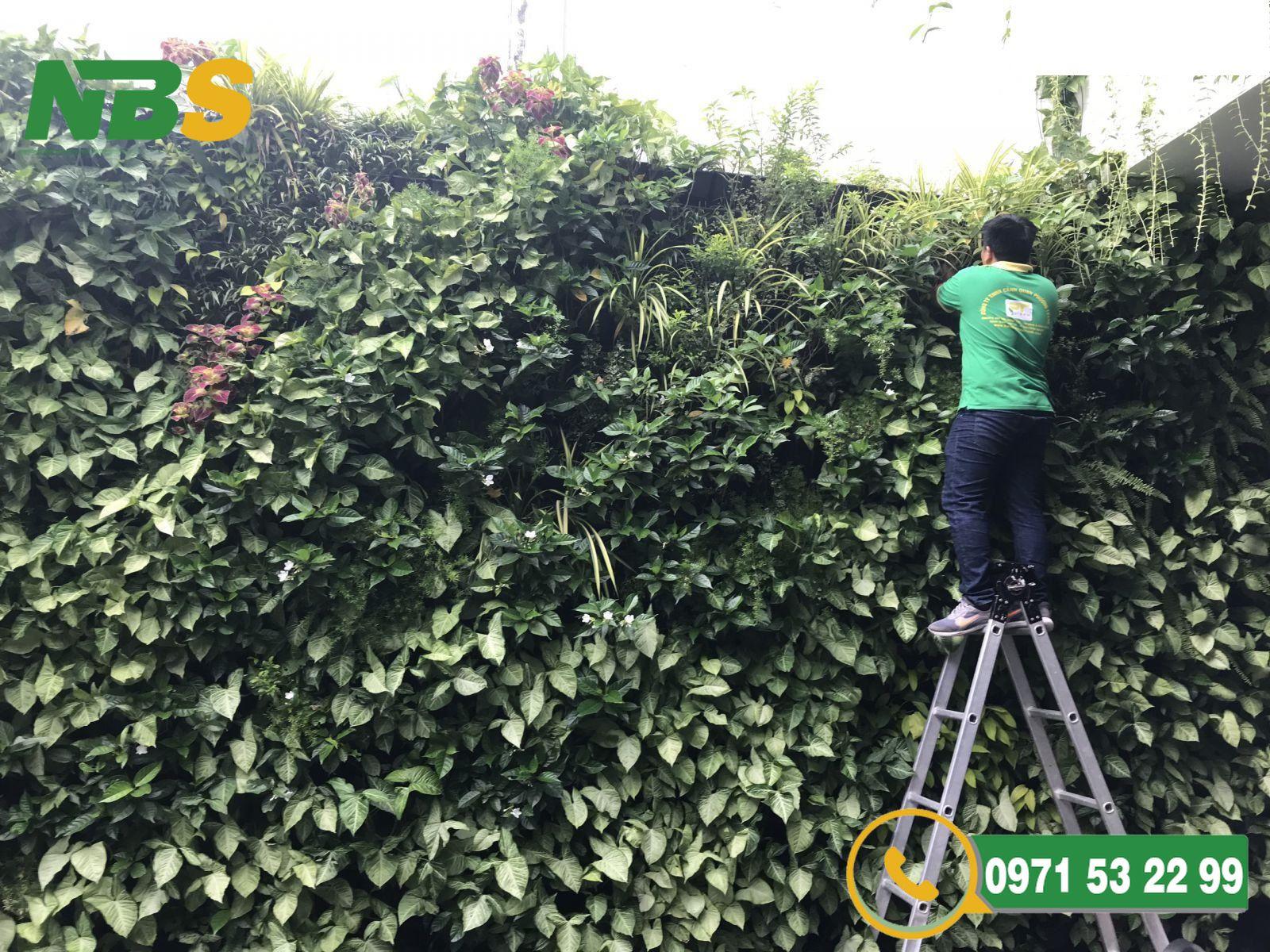 NBS là đơn vị chuyên thiết kế thi công tường cây xanh tại Hà Nội