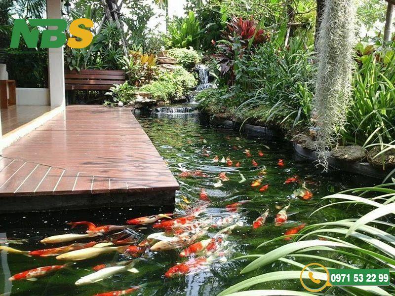 Thiết kế thi công hồ cá koi cho biệt thự là một phần của tiểu cảnh sân vườn