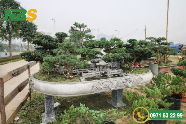 Mẫu thiết kế kiến trúc tùng la hán mini được tạo thành từ bảy cây tùng