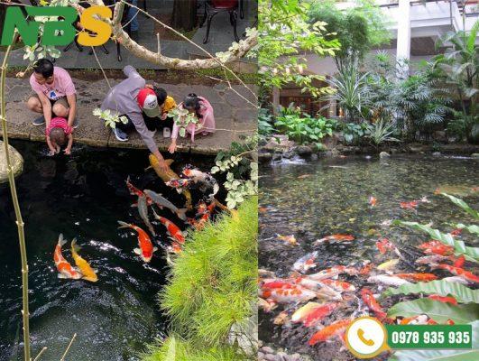 Thi công hồ cá Koi cho biệt thự sân vườn