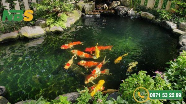 Khi thi công hồ cá Koi cần lưu ý đến hệ thống lọc nước