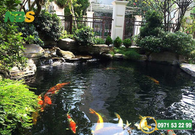 Mẫu thiết kế tiểu cảnh sân vườn kết hợp hồ cá Koi hồ nước động